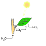Solarne ćelije na bazi fotosinteze